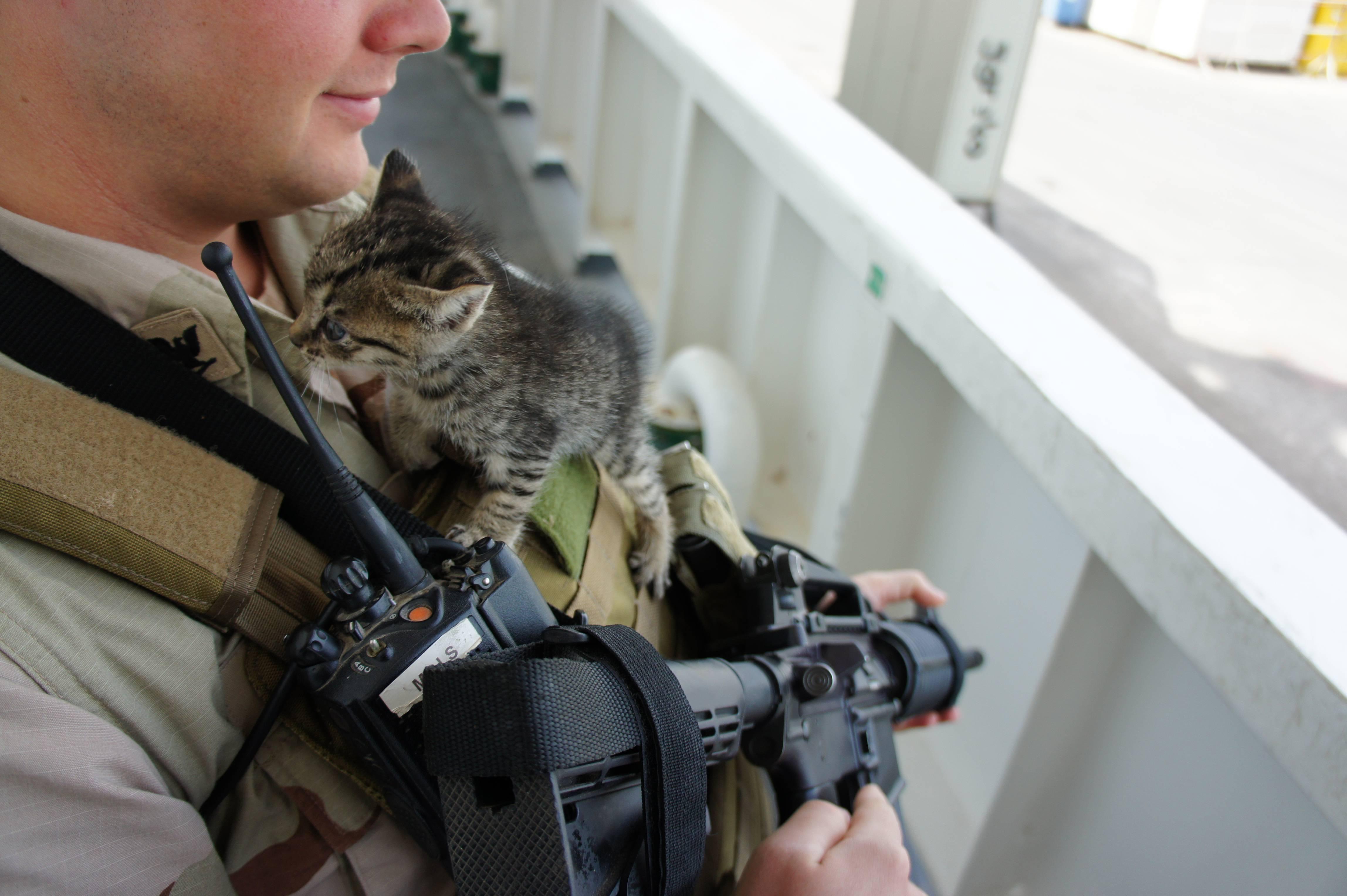 картинки боевых кошек наличии