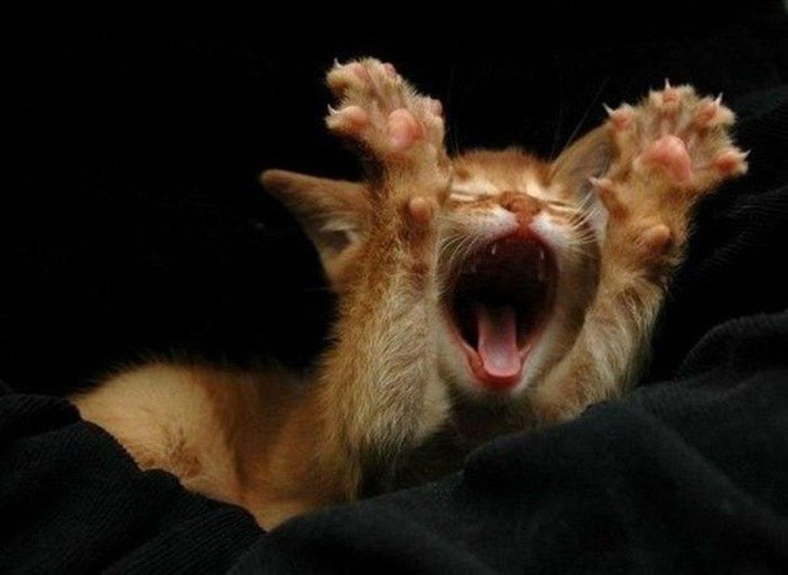 Спокойной ночи фото демотиваторы