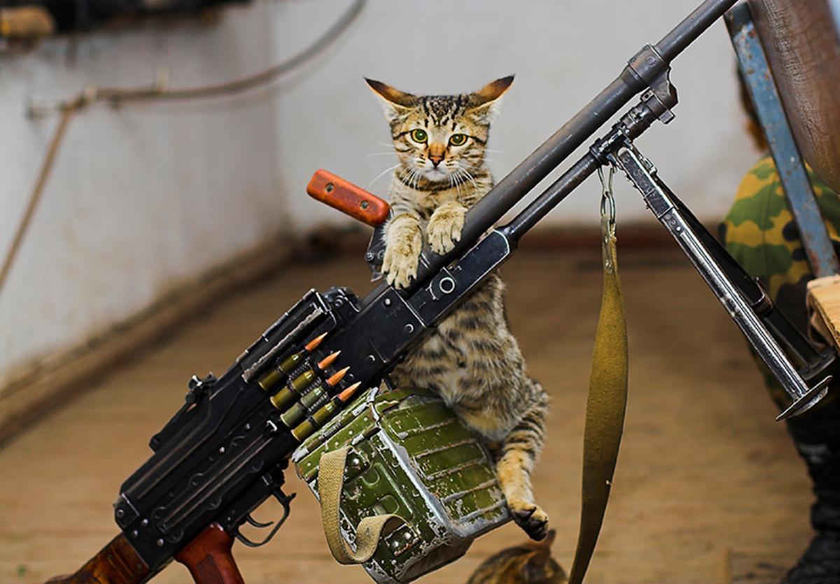 боевые котята картинки действительно, иногда