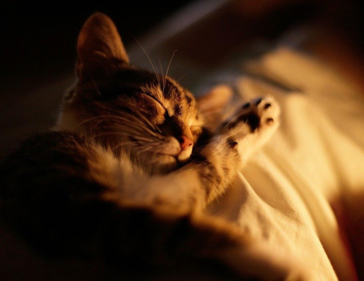 Спокойной ночи милый друг картинки прикольные, смешной панды картинки