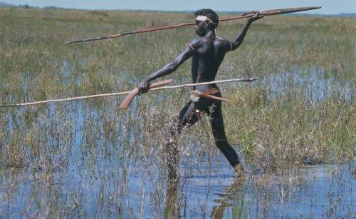 Australia_Australian_Aborigine_Spear_Hunting.jpg