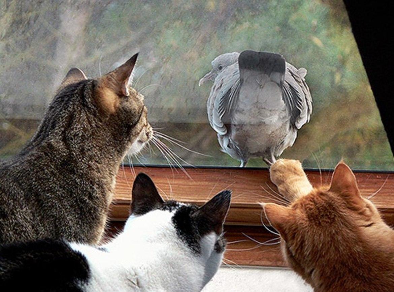 Картинка с котом кто шикарен я шикарен