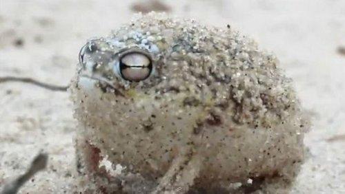 жаба.jpg