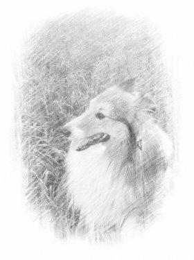 Photofunia Рисунок карандашом#R5PJaSg1m4nc-4d1FkmcIA_o.jpg