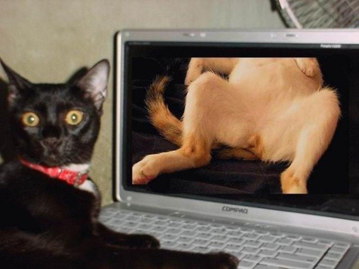 Сэкс кот в сапогах 26 фотография