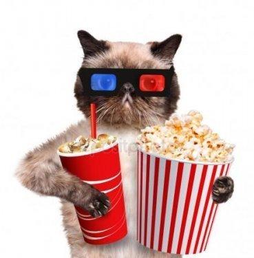 depositphotos_45555437-stock-photo-cat-watching-a-movie.jpg
