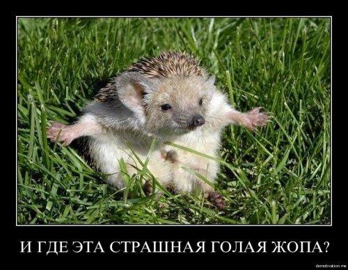 post-4206-0-83262700-1408381177_thumb.jpg